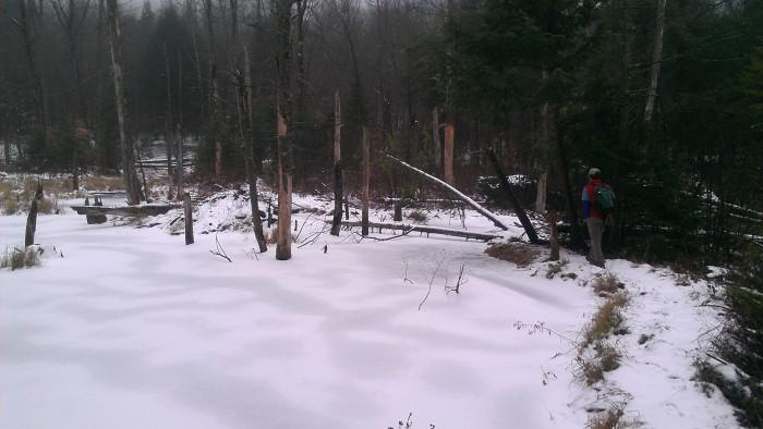 The trail crosses over the beaver dam.