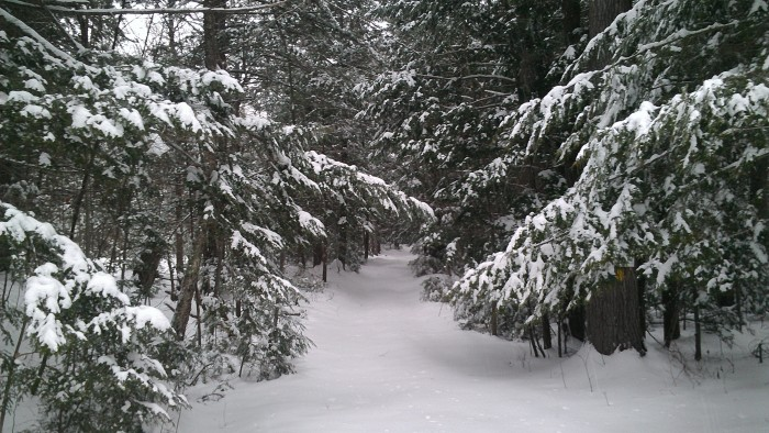The snowy Austin Brook Trail.