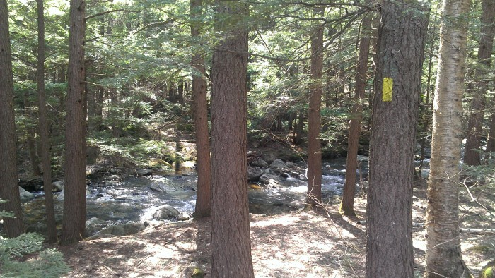 The hemlock forest and the rushing river.