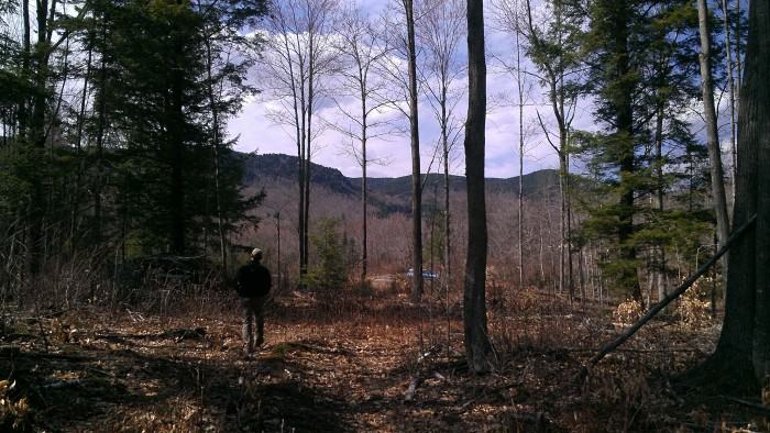 The northern end of the trail has recently been thinned, leaving hardwoods and prickers (beware of your bare legs).