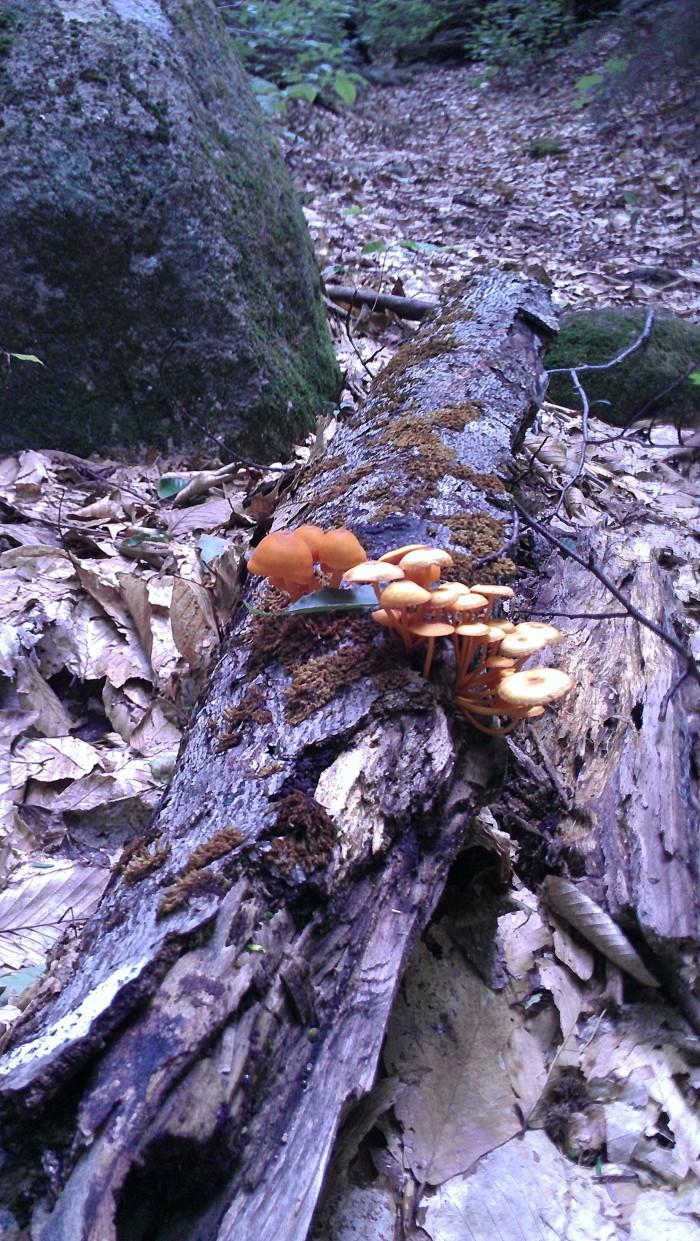 Interesting mushrooms along the trail.