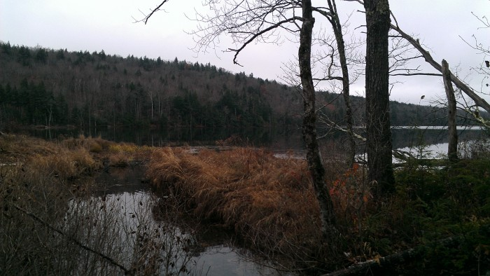 One of the Shell Pond inlets where we saw a one of the many beavers that live here.