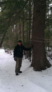 Andrew points out a large hemlock next to the trail.