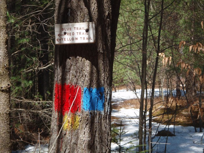 The junction where the blue trail splits from the red and yellow trail.