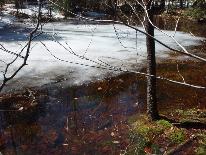 A large vernal pool next to the trail.