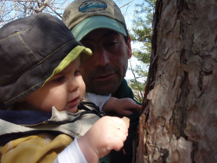 Alden is very interested in the bark of the red pine tree.