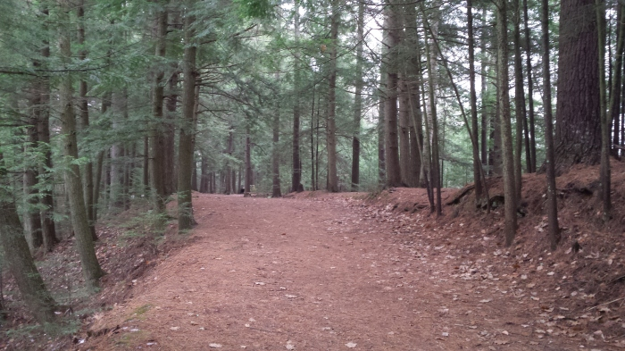 The wide open trail/roadway through the Conservation Area.
