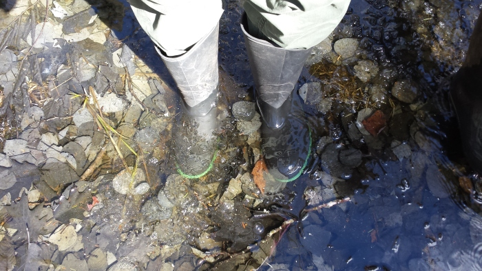 We were glad we opted to wear our rain boots for this hike.