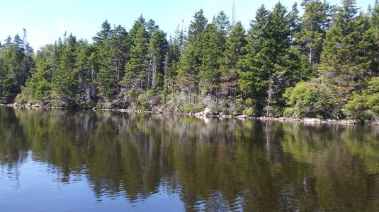 Evergreen shore.