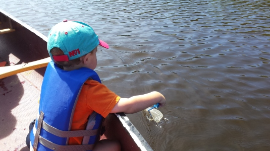 Alden looking for fish from the canoe.