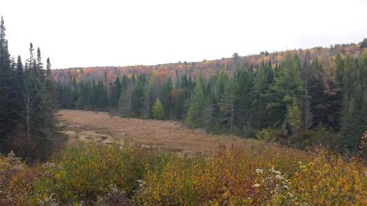 The beaver pond.