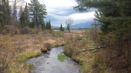 John's River